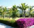 Красивое видео о городе Санья тропический Хайнань